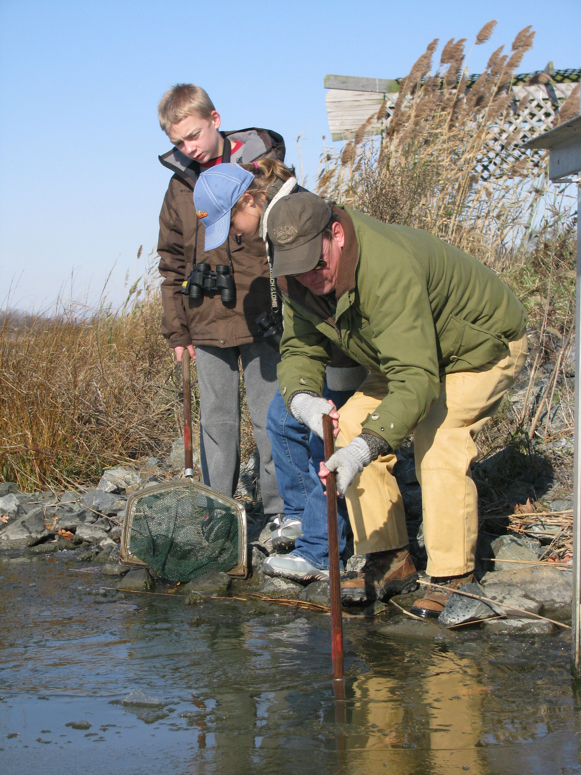 Using dip nets, Young Waterfowlers search for aquatic life in a brackish pond at Woodland Beach Wildlife Area.