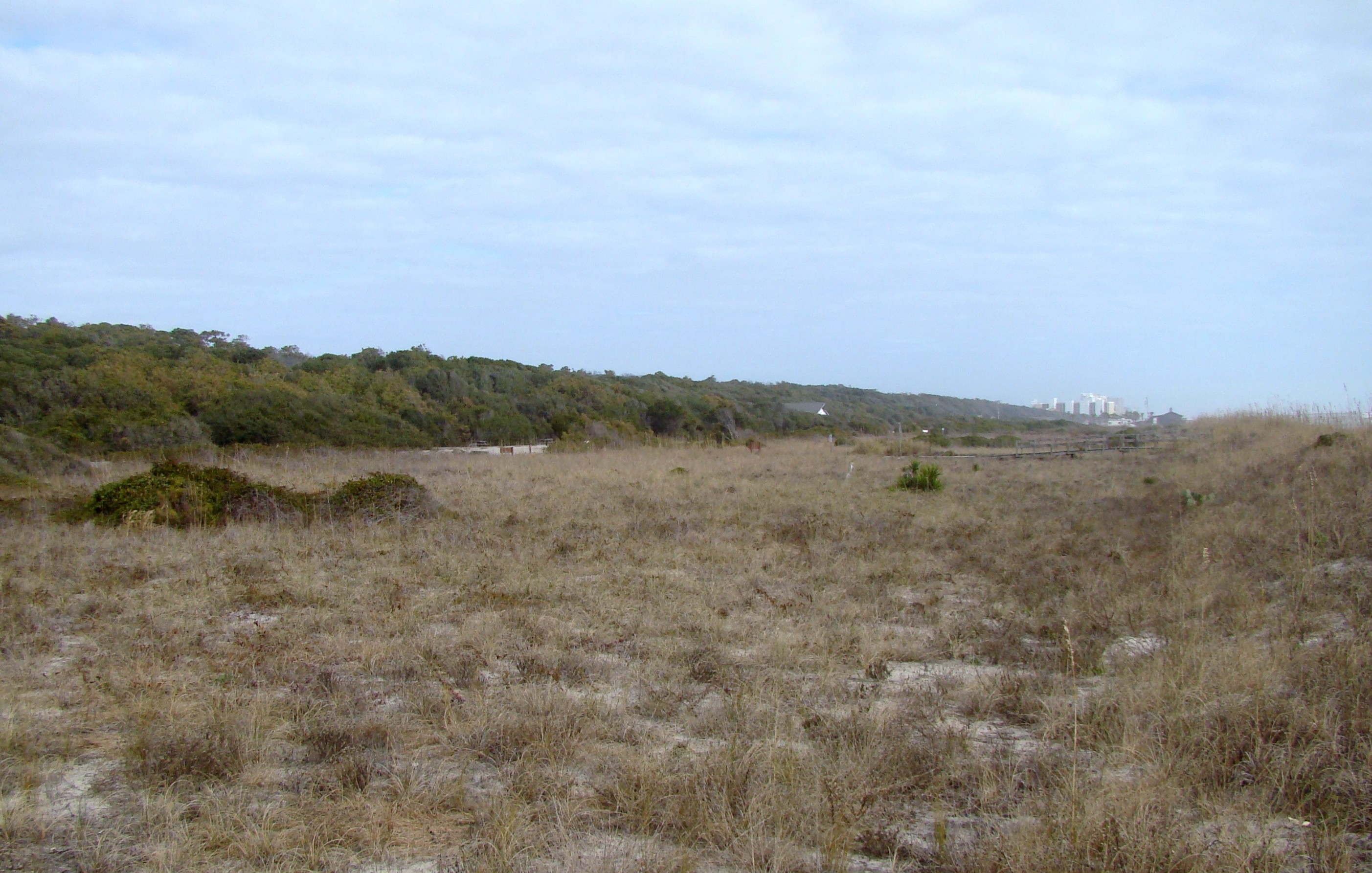 Myrtle Beach State Park back-dunes and maritime forest.