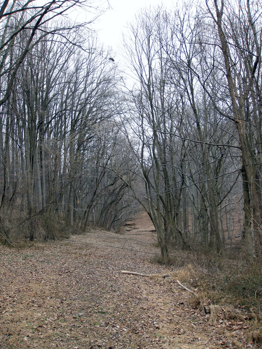 We follow a gas pipeline right of way through private property.  This stretch goes through a fine stand of deciduous forest.