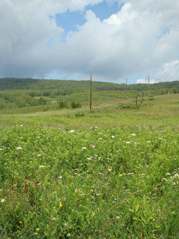 The meadows at Fort Indiantown Gap host a large variety of butterflies, birds, and wildflowers.  Photo by Joe Sebastiani