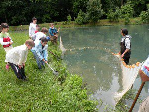 Seining for herps in a pond was exciting!