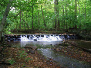 A lovely waterfall cascades over an old mill dam on Burrows Run.
