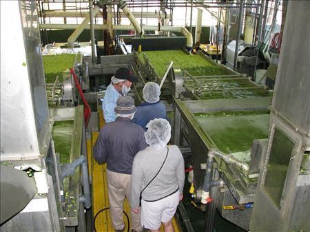 Bill Simpson, plant manager of Hanover foods in Clayton, DE, explains the process of lima bean cleaning and sorting.