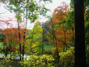 Maples, Ash, and Spicebush color up the banks of the Red Clay Creek (photo by Derek Stoner 10.25.09)