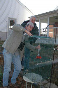 Bruce Peterjohn, a professional bird bander, places a wire cage trap around the hummingbird feeder at Jimw White's home.  They captured the young male Rufous Hummingbird in this trap!  Photo by Jim White.