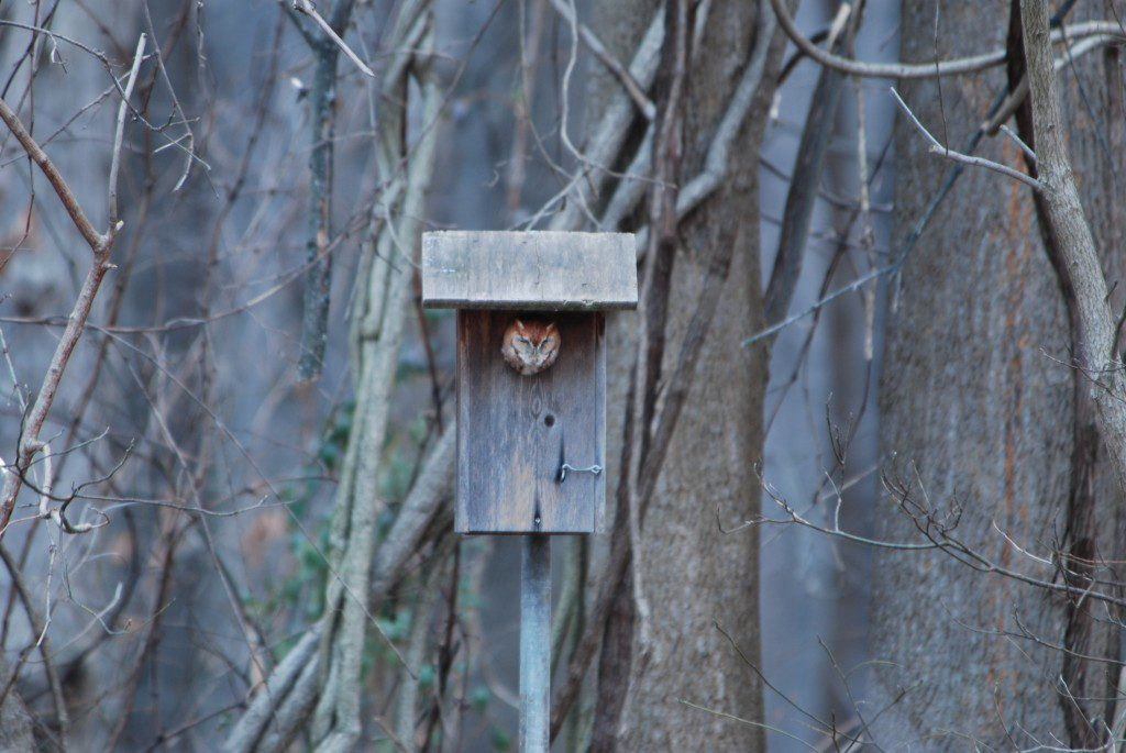 Set up your box so that you can easily see it from a window in your house.  Photo by Jim White.
