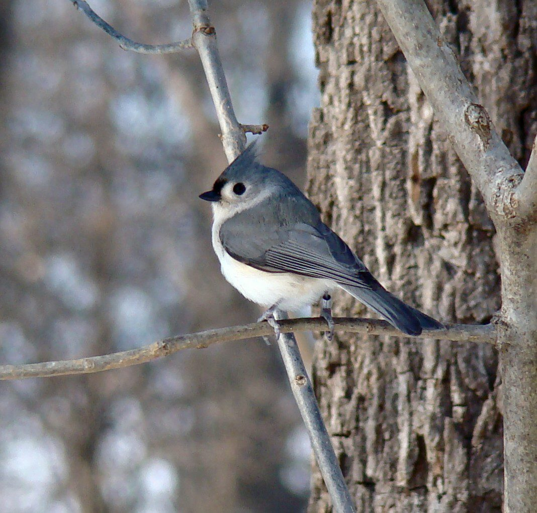 great backyard bird count the nature of delaware