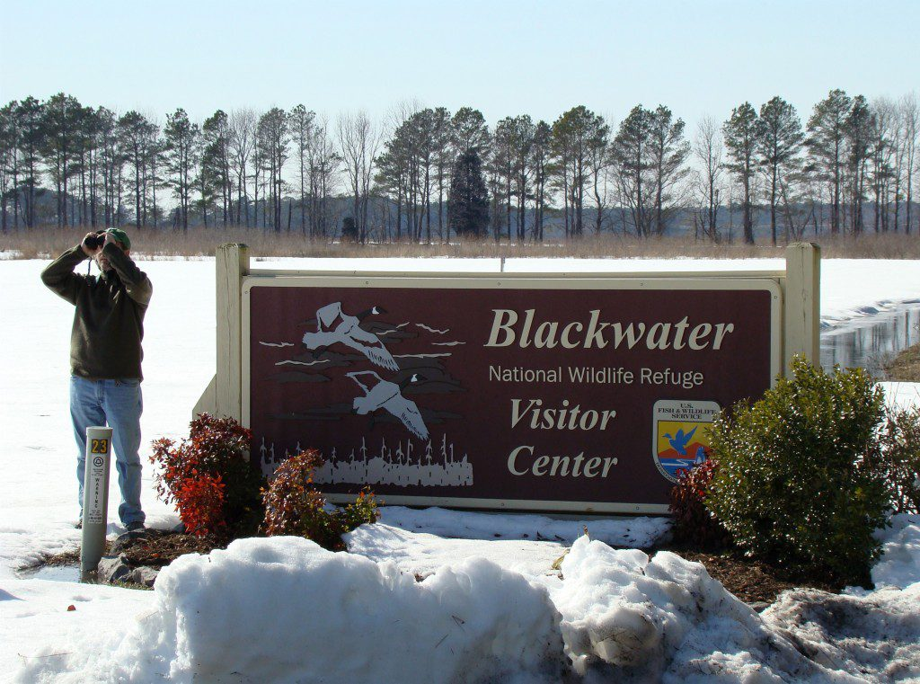 Blackwater National Wildlife Refuge near Cambridge, Maryland is a popular location for naturalists in the winter.