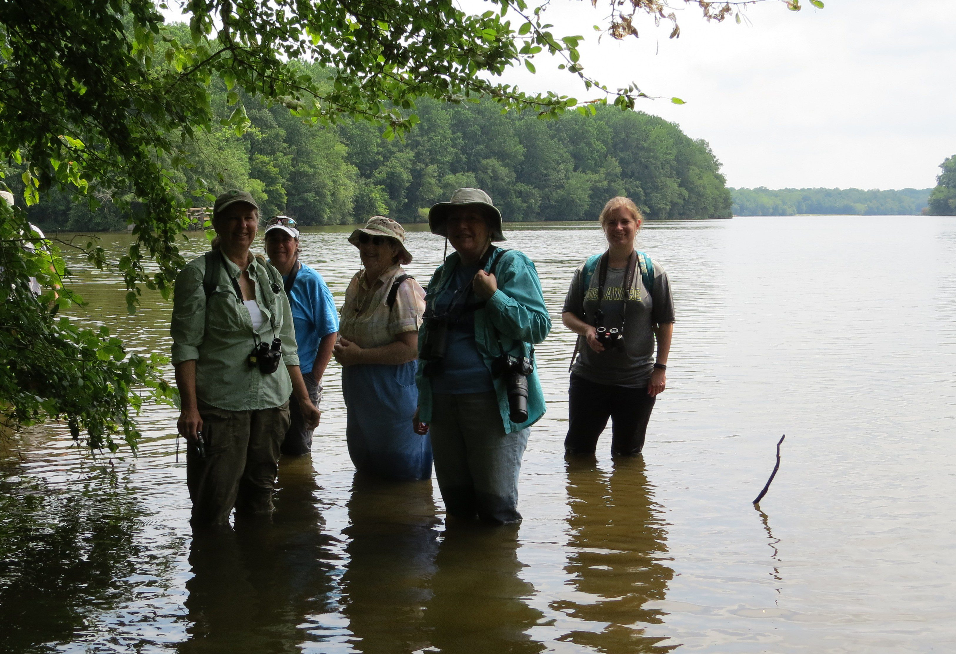 Looking for dragonflies and damselflies requires getting your feet wet, or in this case, wading into Lums Pond.  Some of us got a lot more of our bodies wet than our feet!  Photo by Joe Sebastiani